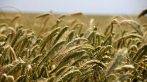 More about: SUMMER WITHOUT AGRICULTURAL DROUGHT