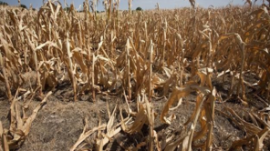 More about: STOP DROUGHT NOW! A MAJOR THREAT OF AGRICULTURAL AND HYDROLOGICAL DROUGHT IN MASOVIA