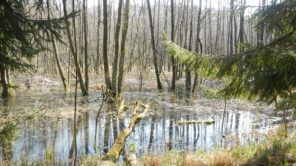 More about: CELEBRATING THE WORLD'S WETLANDS DAY